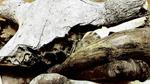 Artikel: Osteologische Auswertung von Langknochen der Ungulata aus dem Leinetal südlich von Hannover (Marvin Applegate)