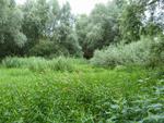 Artikel: Ökologische Differenzierung limnischer und fluviatiler Lebensräume an der Leine bei Garbsen in der Region Hannover (Tim Lukas Pikos)