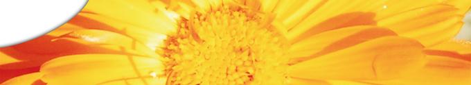 seitenkopfbild-0014 image